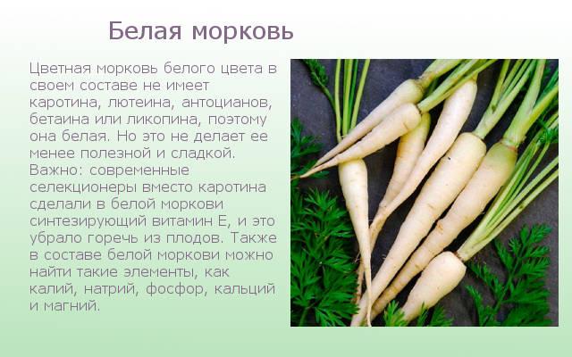 Белая морковка