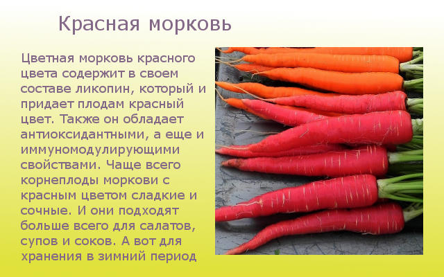 Красная морковка