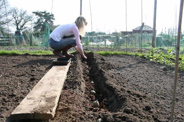 Подготовка места под картофель
