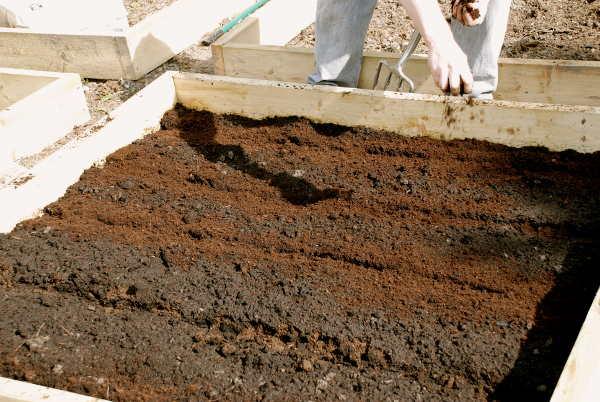Подготовка места под морковь