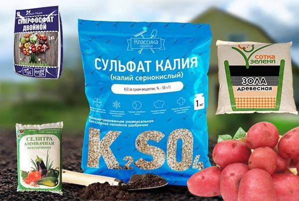 Подкормка картофеля калием