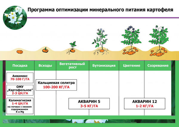 схема подкормок картофеля