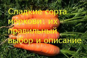Сладкие сорта моркови