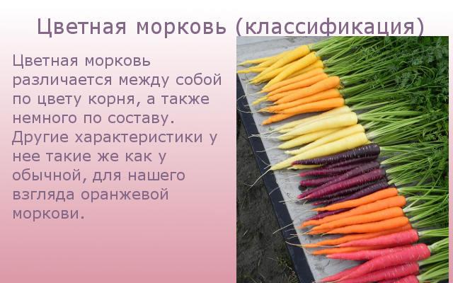 Цветная морковь