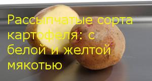 Рассыпчатые сорта картофеля