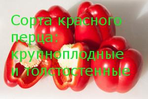 Сорта красного перца