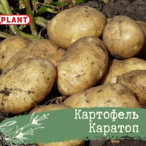Каратоп