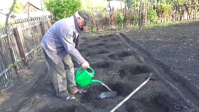Подготовка участка для выращивания арбузов