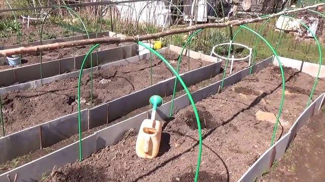 Подготовка участка для выращивания дыни