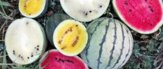 Сорта арбузов